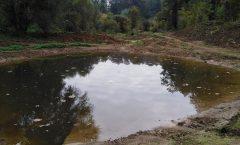 Travaux sur le site des étangs de Marche-les-Dames: une bonne nouvelle pour les batraciens.