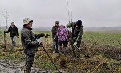 Action plantation : 300m de haie d'aubépines